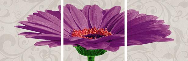 Gerbera jamesonii violett